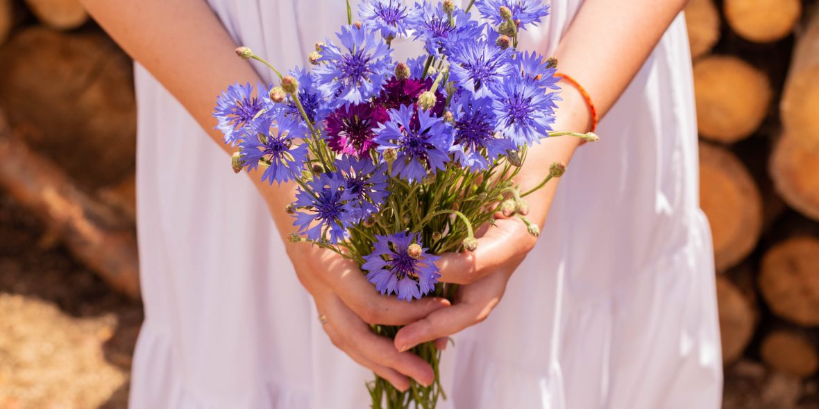 A,Bouquet,Of,Cornflowers,In,Young,Woman,Hands.,Girl,In